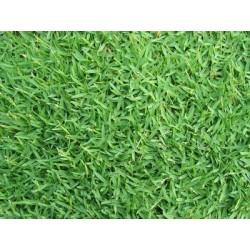 SEMI DI GRAMIGNONE PER PRATO CARPET GRASS KG. 10