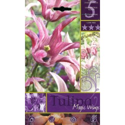 BULBI DI FIORE TULIPA MAGIC WINGS N. 5